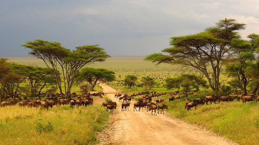 Animales Serengeti