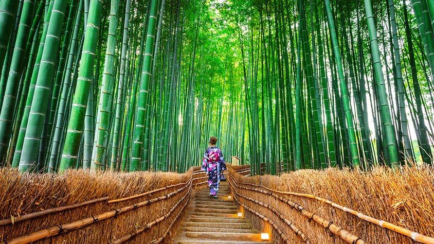 viaje Japón Infinito