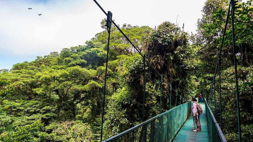 viaje Ballenas y Delfines en Costa Rica