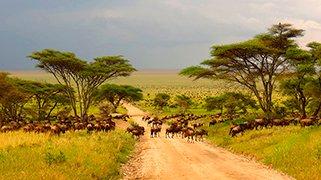 Espectacular Tanzania
