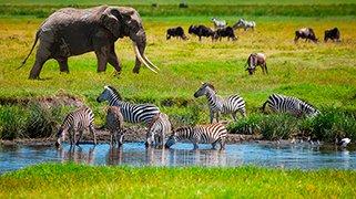 Tierras De Tanzania
