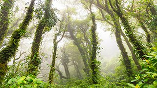 Bosque Volcan Maderas