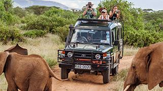 Safari kasuku